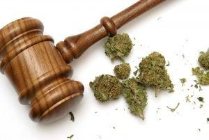 Marijuana Defense Lawyer